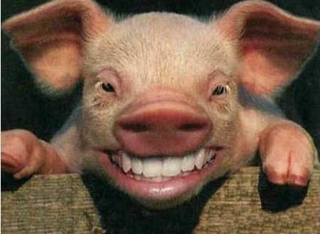 Tăierea porcului înainte de Ajun…