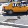 Primăria Alexandria transformă spații verzi în locuri de parcare întru folosul afaceriștilor