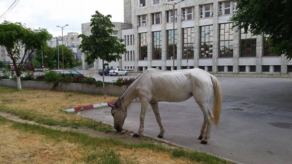 calul...