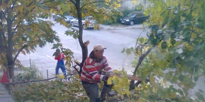 Un patron de cârciumă din Alexandria nu s-a dat jos din copac