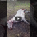 VIDEO: Un cal a fost bătut și înjunghiat, la Piatra