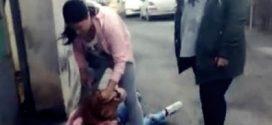 Scene șocante pe străzile Alexandriei: o elevă și-a lovit o colegă cu pumnii și picioarele minute în șir. Nimeni n-a intervenit…