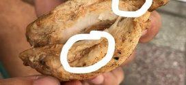 Ce spune PROFI despre viermii găsiți în pui de către un client