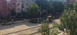 Primăria Alexandria a cumpărat pomi de 27.000 euro, în timp ce taie copaci într-o veselie